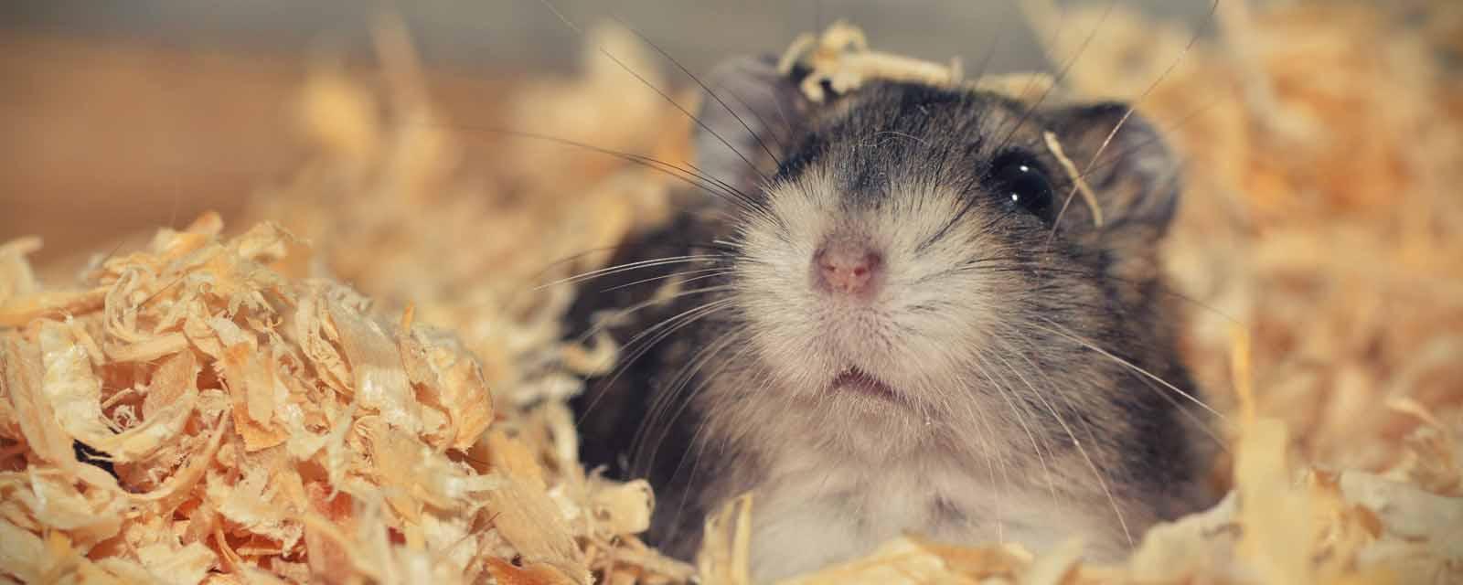 Hamsterfutter kaufen