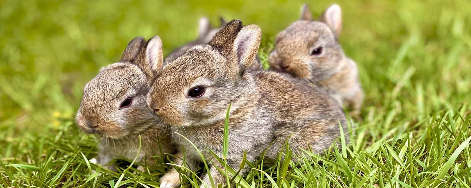 Kaninchenfutter kaufen